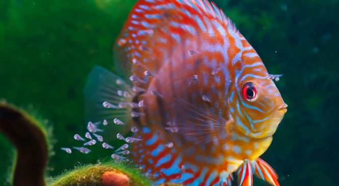 Tips for Ordering Freshwater Fish